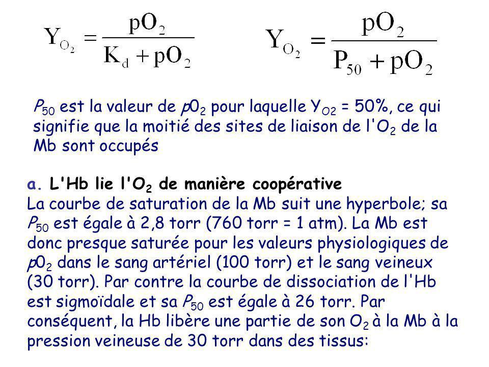 P50 est la valeur de p02 pour laquelle YO2 = 50%, ce qui signifie que la moitié des sites de liaison de l O2 de la Mb sont occupés