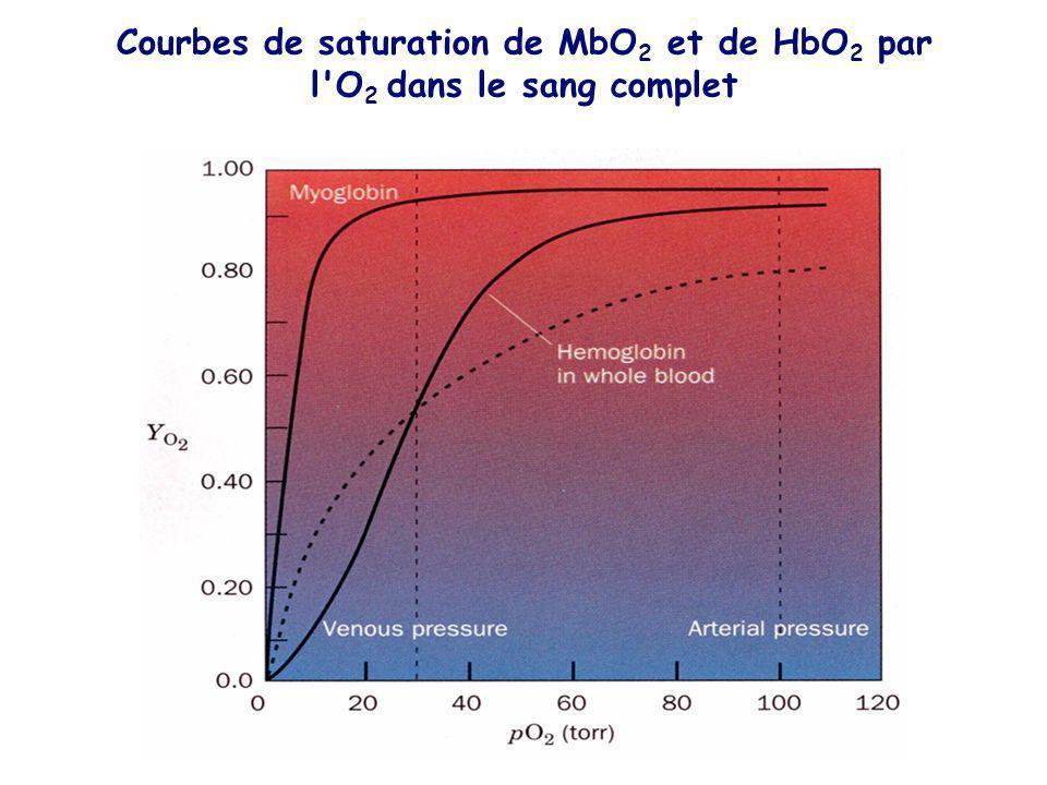 Courbes de saturation de MbO2 et de HbO2 par l O2 dans le sang complet