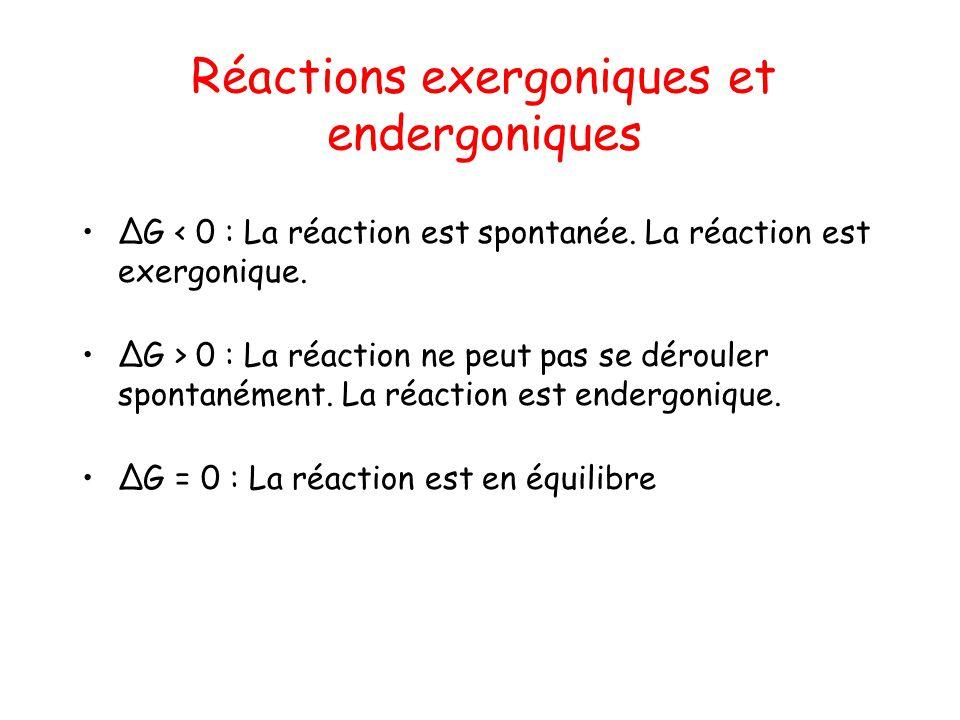 Réactions exergoniques et endergoniques