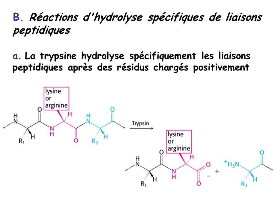 B. Réactions d hydrolyse spécifiques de liaisons peptidiques