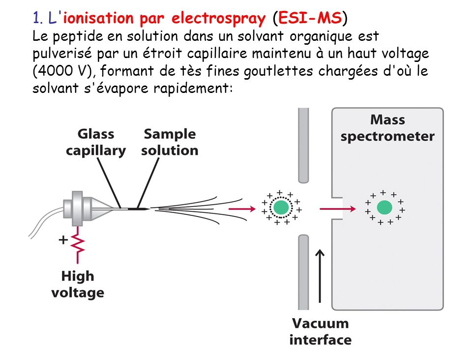 1. L ionisation par electrospray (ESI-MS)