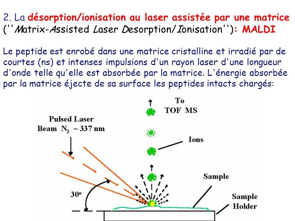 2. La désorption/ionisation au laser assistée par une matrice ( Matrix-Assisted Laser Desorption/Ionisation ): MALDI