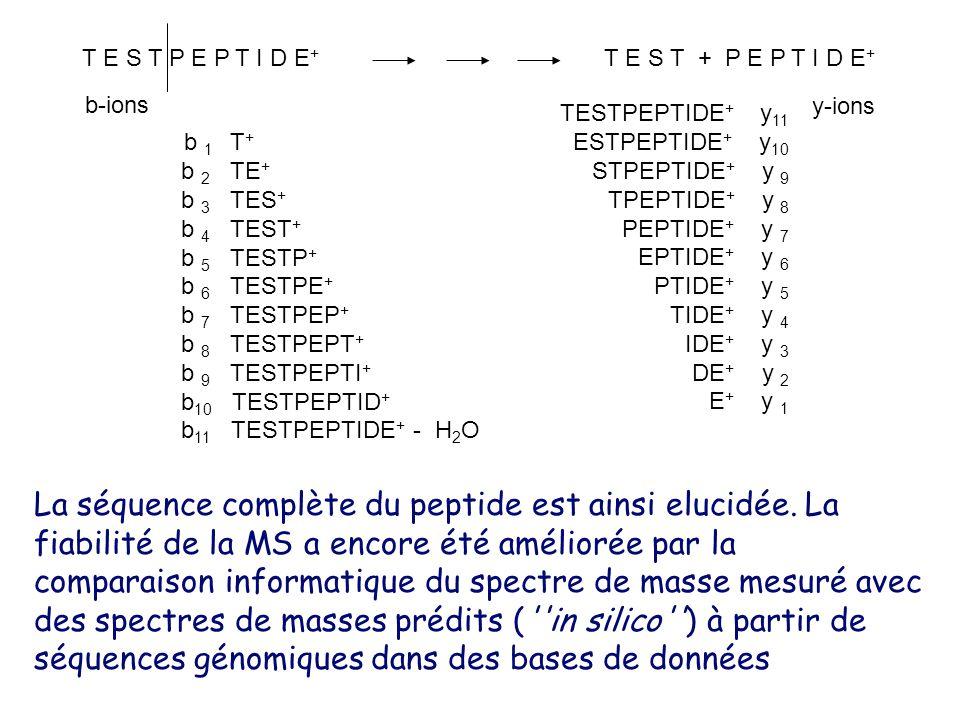 T E S T P E P T I D E+ T E S T + P E P T I D E+ b 1 T+ b 2 TE+ b 3 TES+ b 4 TEST+ b 5 TESTP+