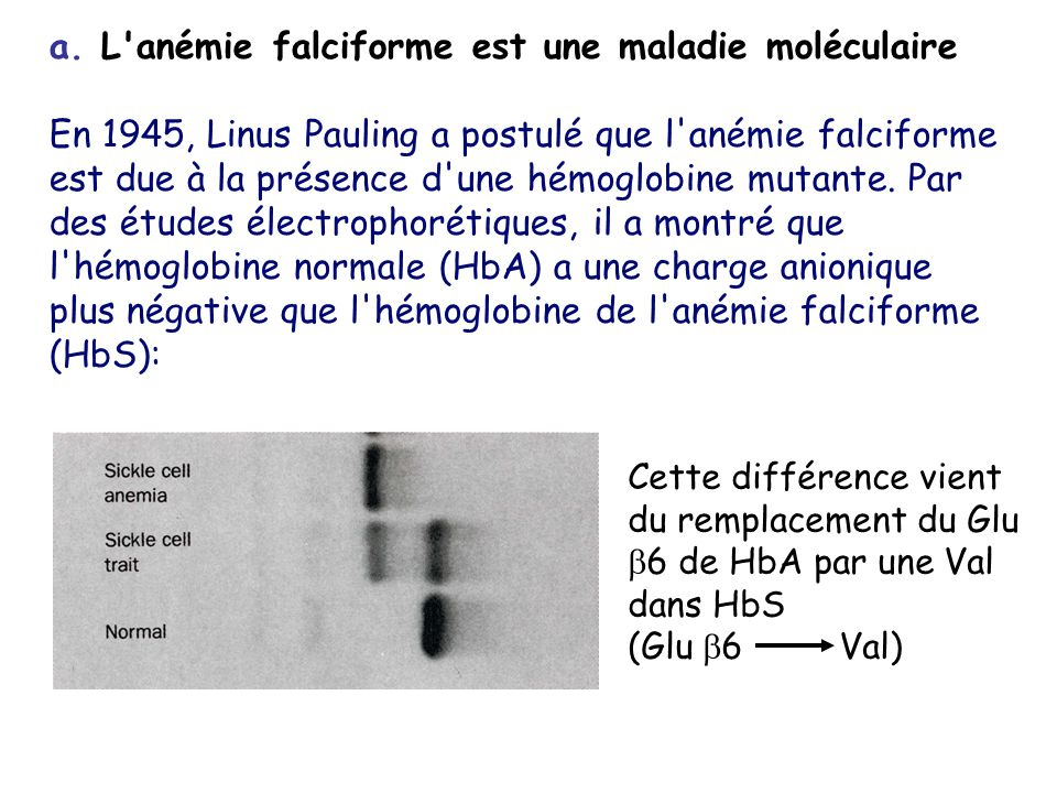 a. L anémie falciforme est une maladie moléculaire