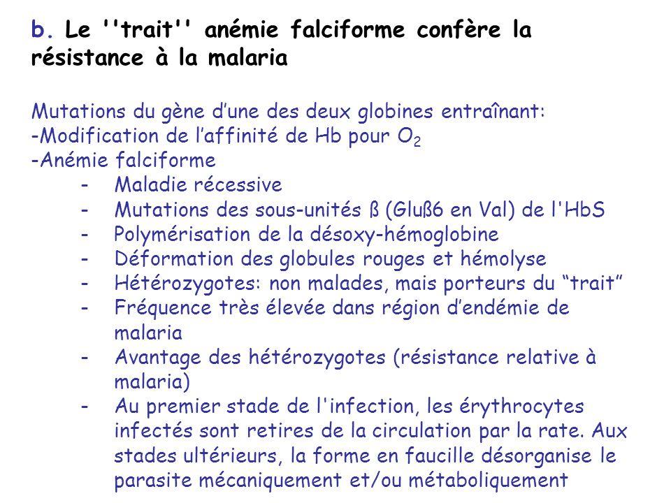 b. Le trait anémie falciforme confère la résistance à la malaria