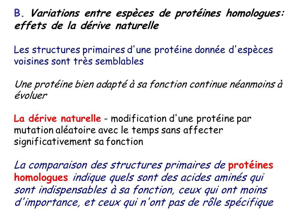 B. Variations entre espèces de protéines homologues: effets de la dérive naturelle