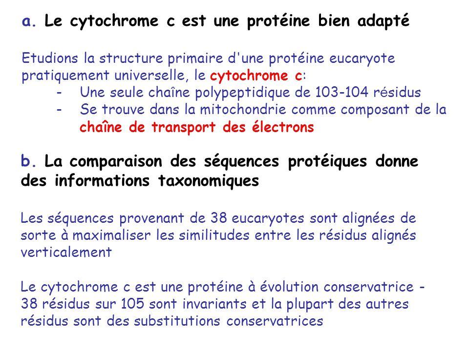 a. Le cytochrome c est une protéine bien adapté