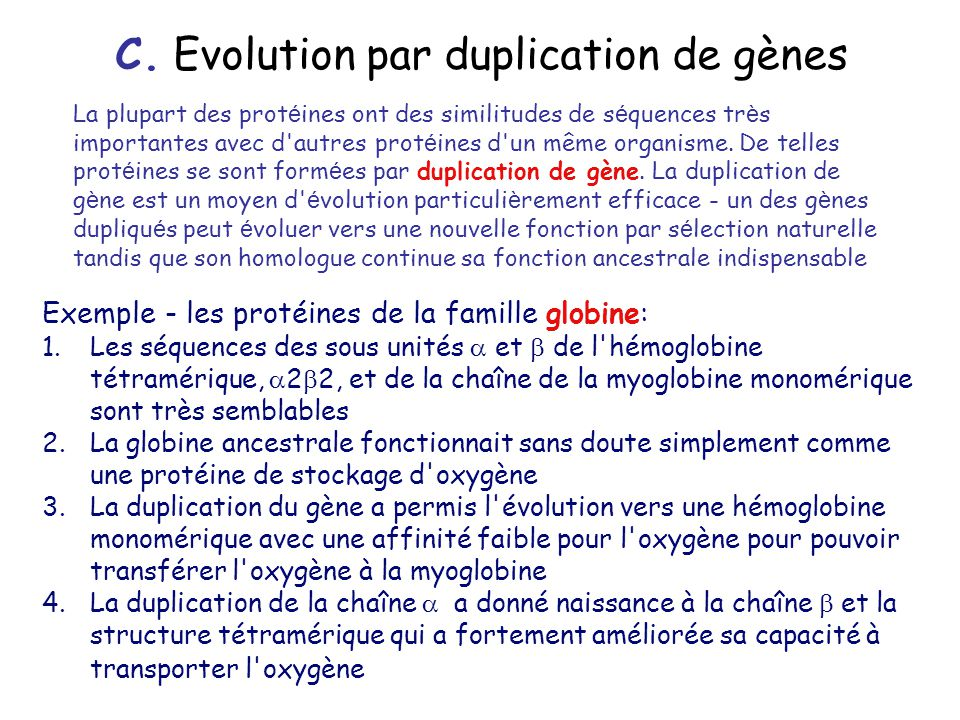 C. Evolution par duplication de gènes
