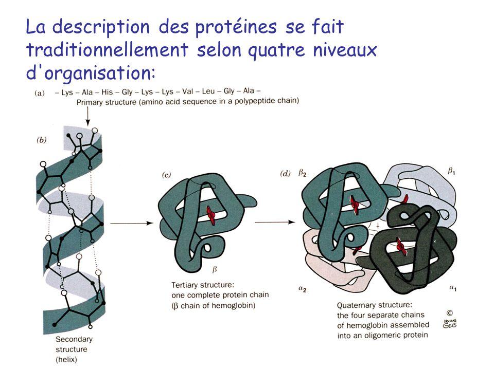 La description des protéines se fait traditionnellement selon quatre niveaux d organisation: