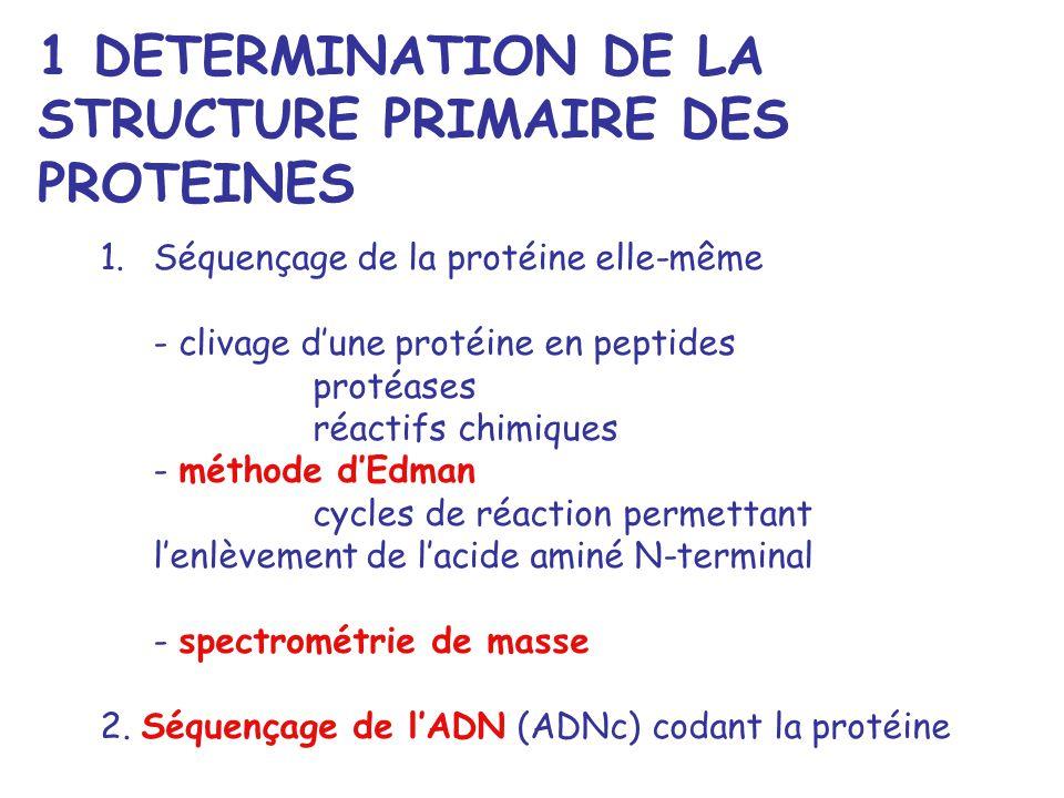 1 DETERMINATION DE LA STRUCTURE PRIMAIRE DES PROTEINES