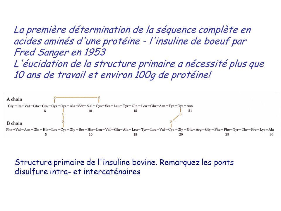 La première détermination de la séquence complète en acides aminés d une protéine - l insuline de boeuf par Fred Sanger en 1953