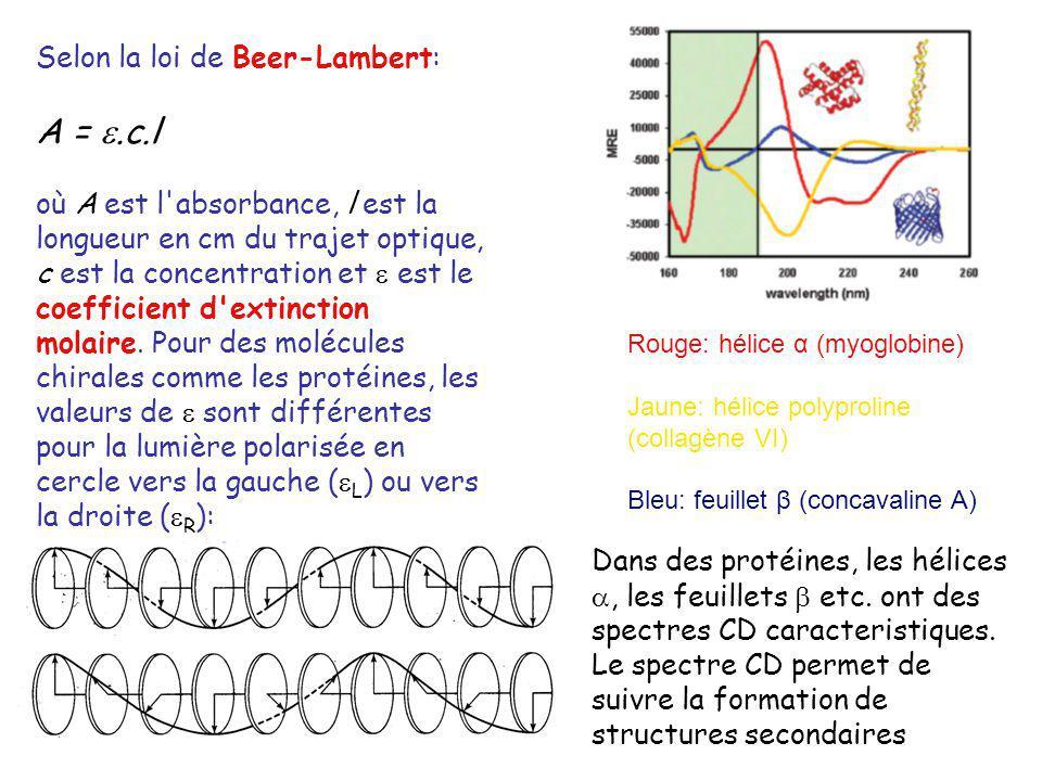 A = .c.l Selon la loi de Beer-Lambert: