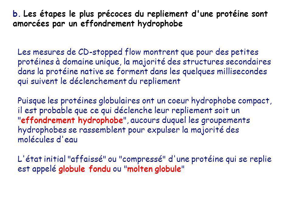 b. Les étapes le plus précoces du repliement d une protéine sont amorcées par un effondrement hydrophobe