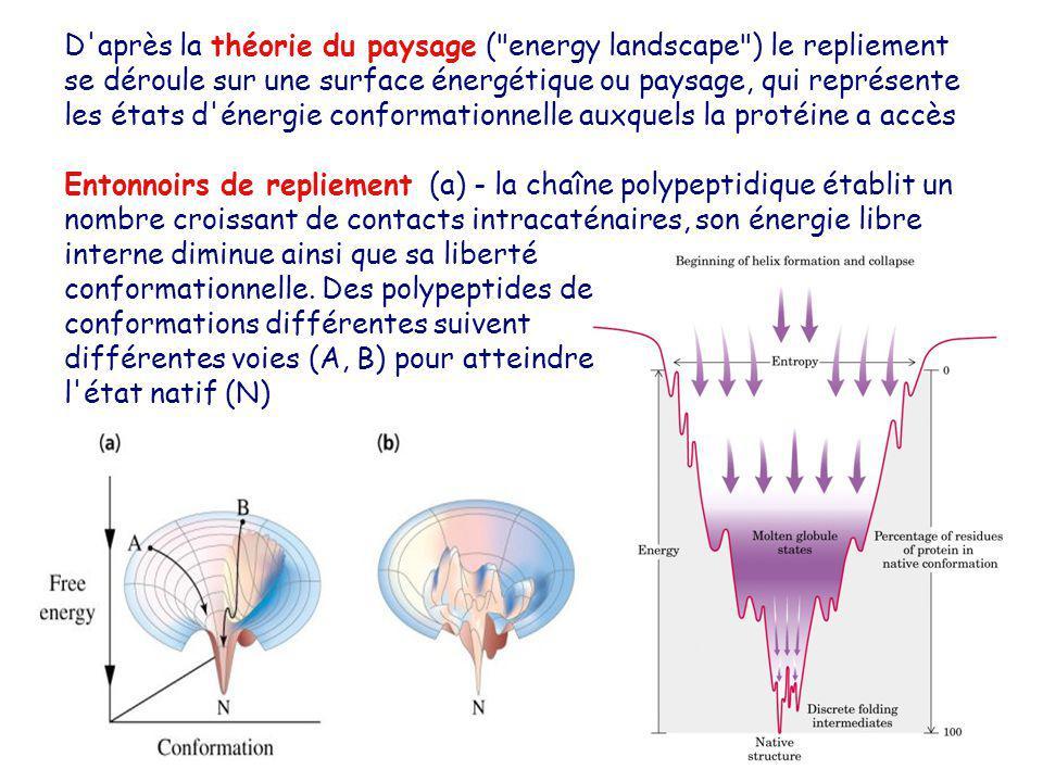 D après la théorie du paysage ( energy landscape ) le repliement se déroule sur une surface énergétique ou paysage, qui représente les états d énergie conformationnelle auxquels la protéine a accès
