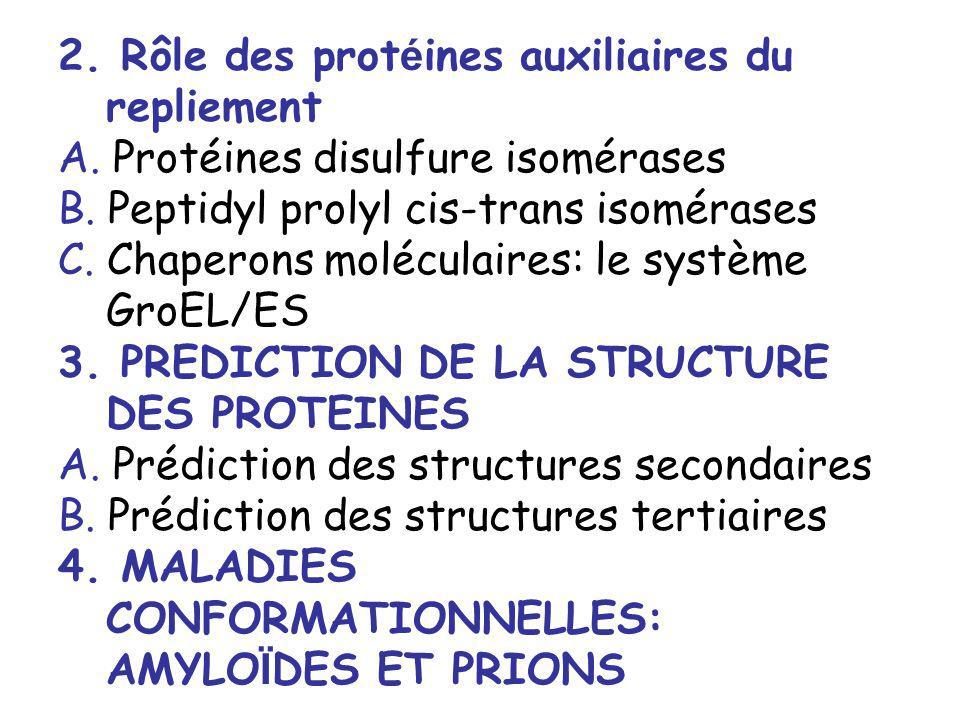 2. Rôle des protéines auxiliaires du repliement