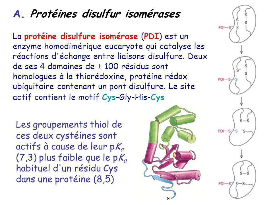 A. Protéines disulfur isomérases
