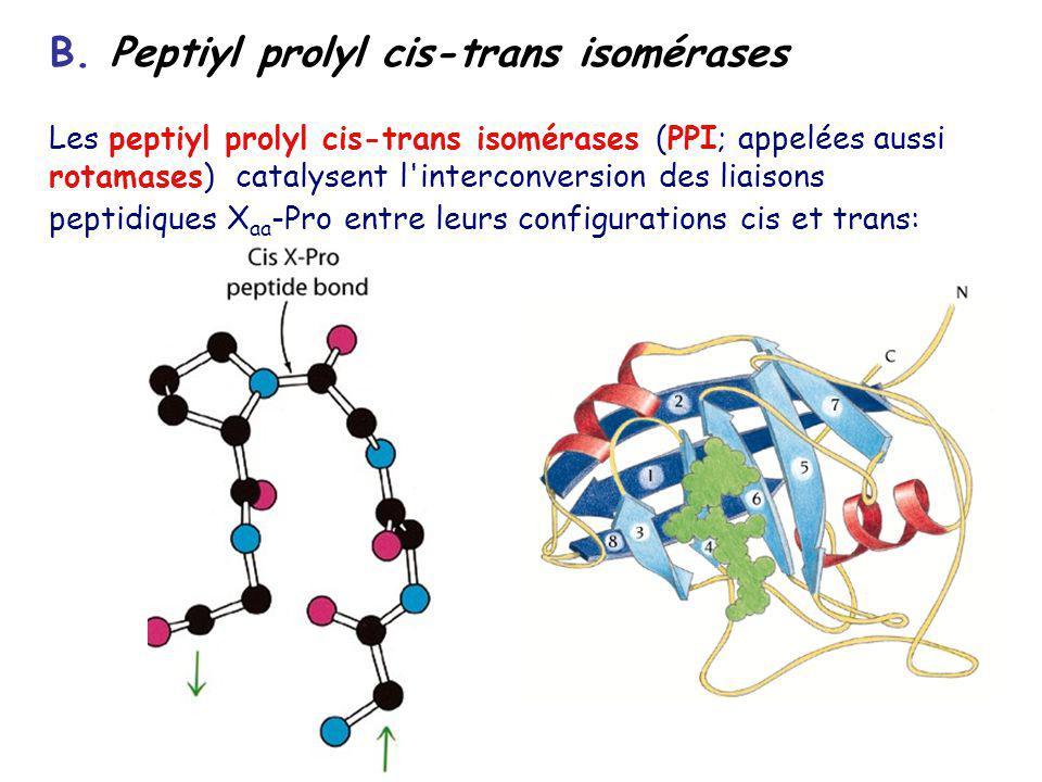 B. Peptiyl prolyl cis-trans isomérases