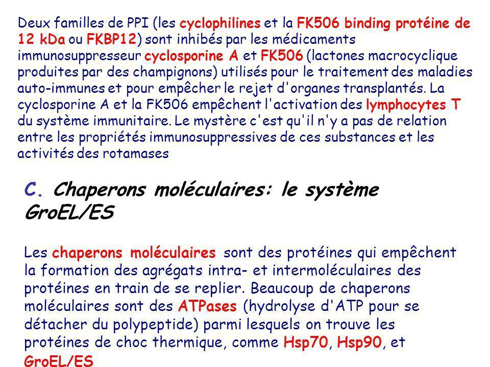 C. Chaperons moléculaires: le système GroEL/ES