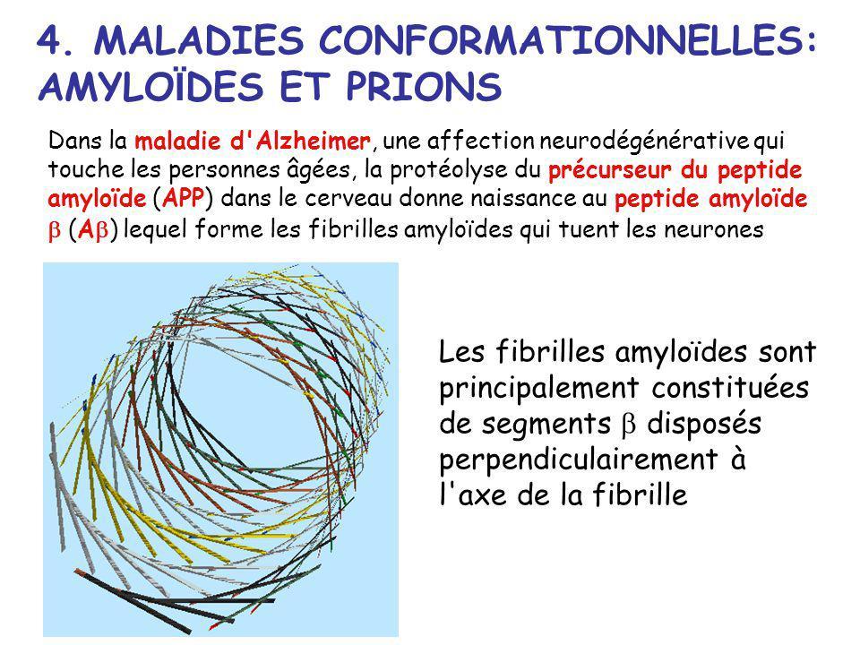 4. MALADIES CONFORMATIONNELLES: AMYLOÏDES ET PRIONS