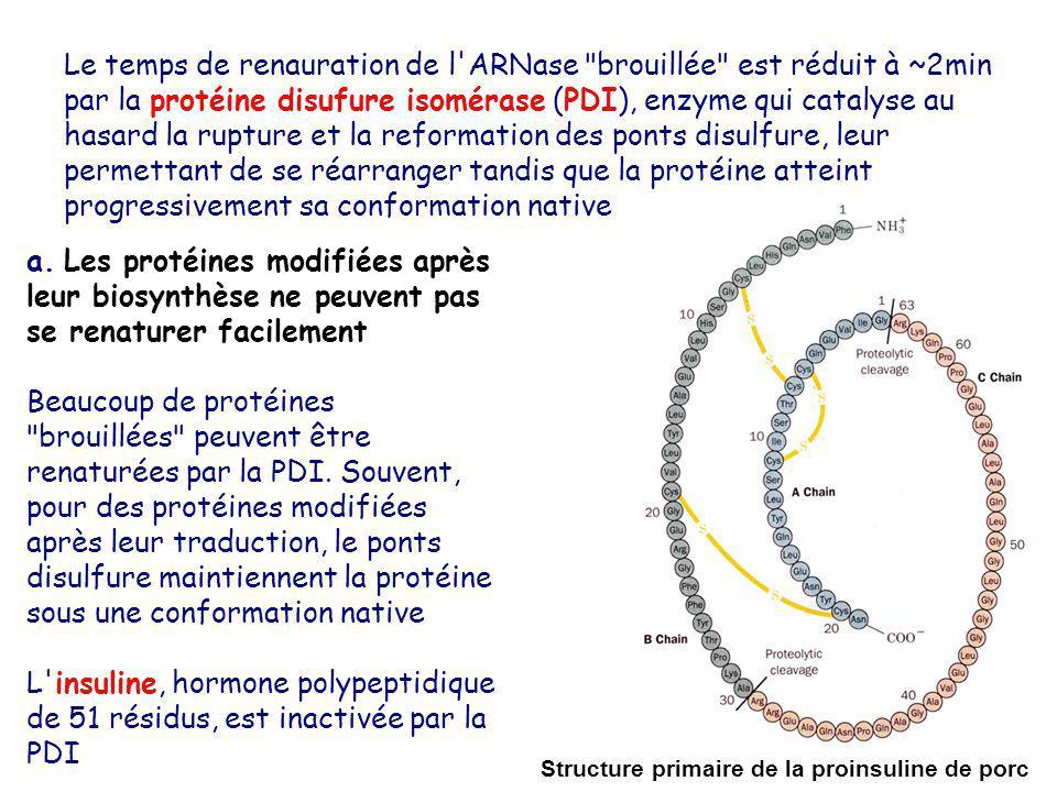 Le temps de renauration de l ARNase brouillée est réduit à ~2min par la protéine disufure isomérase (PDI), enzyme qui catalyse au hasard la rupture et la reformation des ponts disulfure, leur permettant de se réarranger tandis que la protéine atteint progressivement sa conformation native