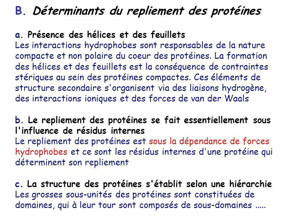 B. Déterminants du repliement des protéines