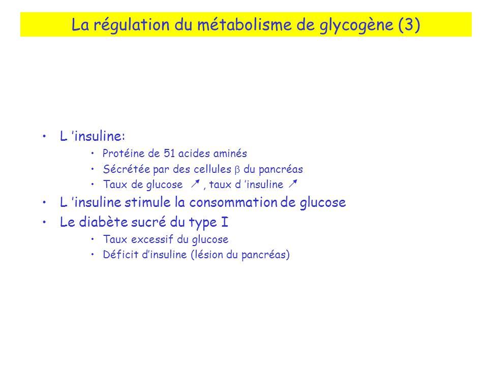 La régulation du métabolisme de glycogène (3)