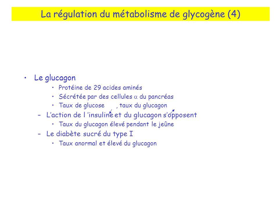 La régulation du métabolisme de glycogène (4)