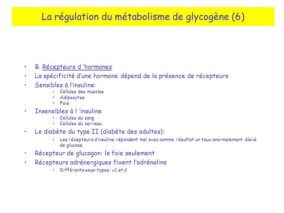 La régulation du métabolisme de glycogène (6)