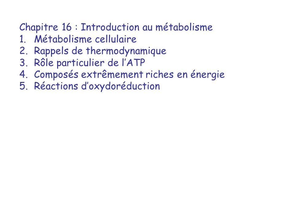 Chapitre 16 : Introduction au métabolisme
