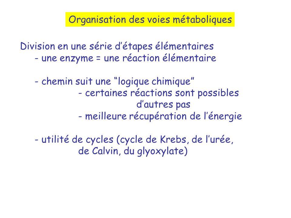 Organisation des voies métaboliques