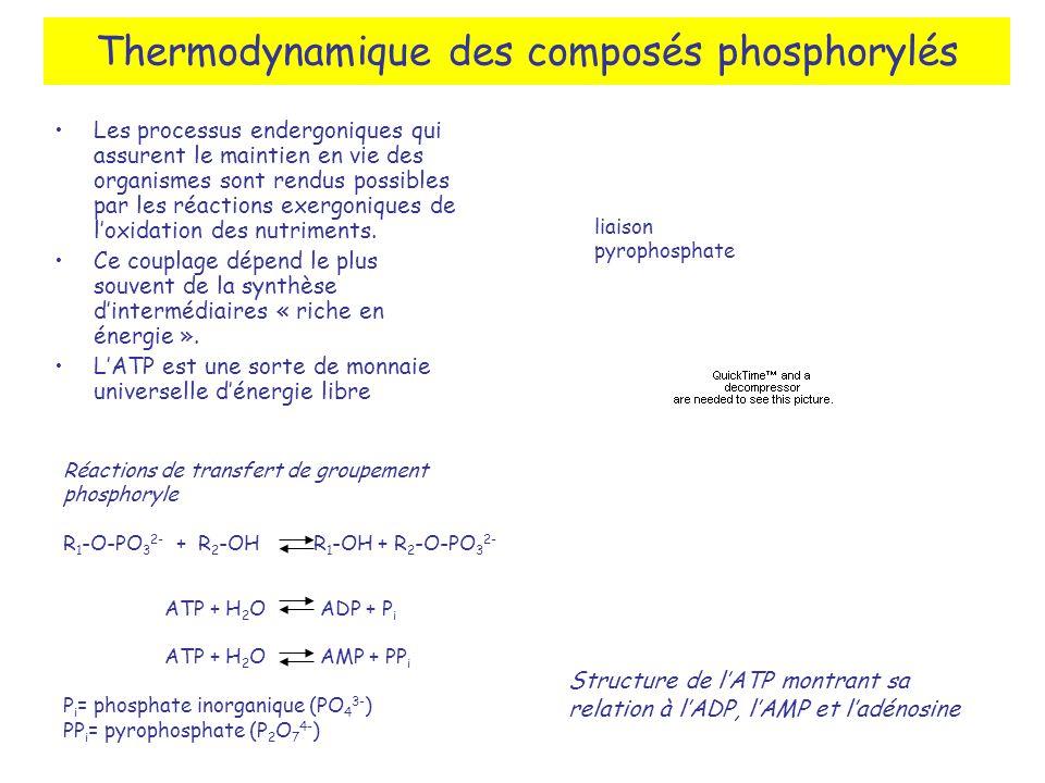 Thermodynamique des composés phosphorylés