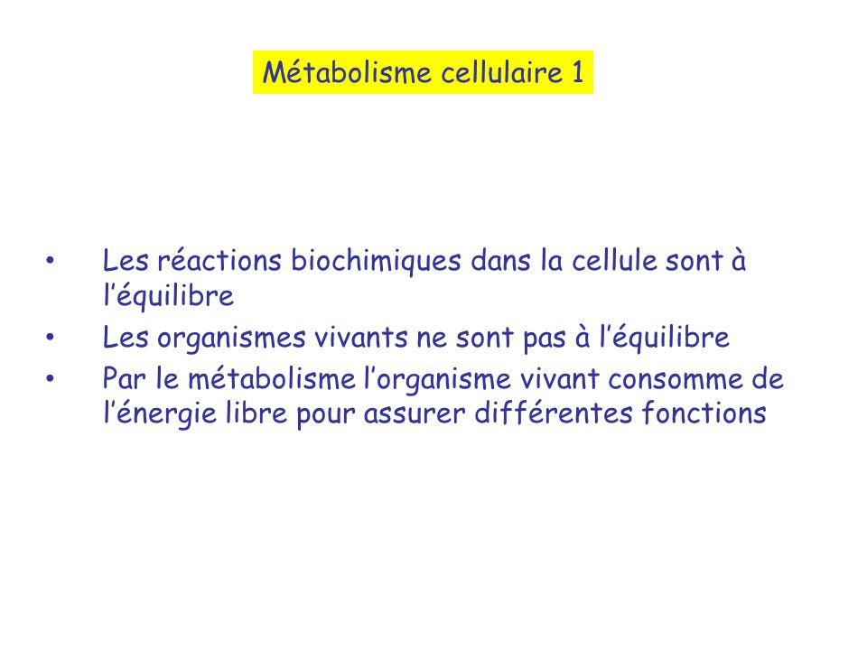 Métabolisme cellulaire 1