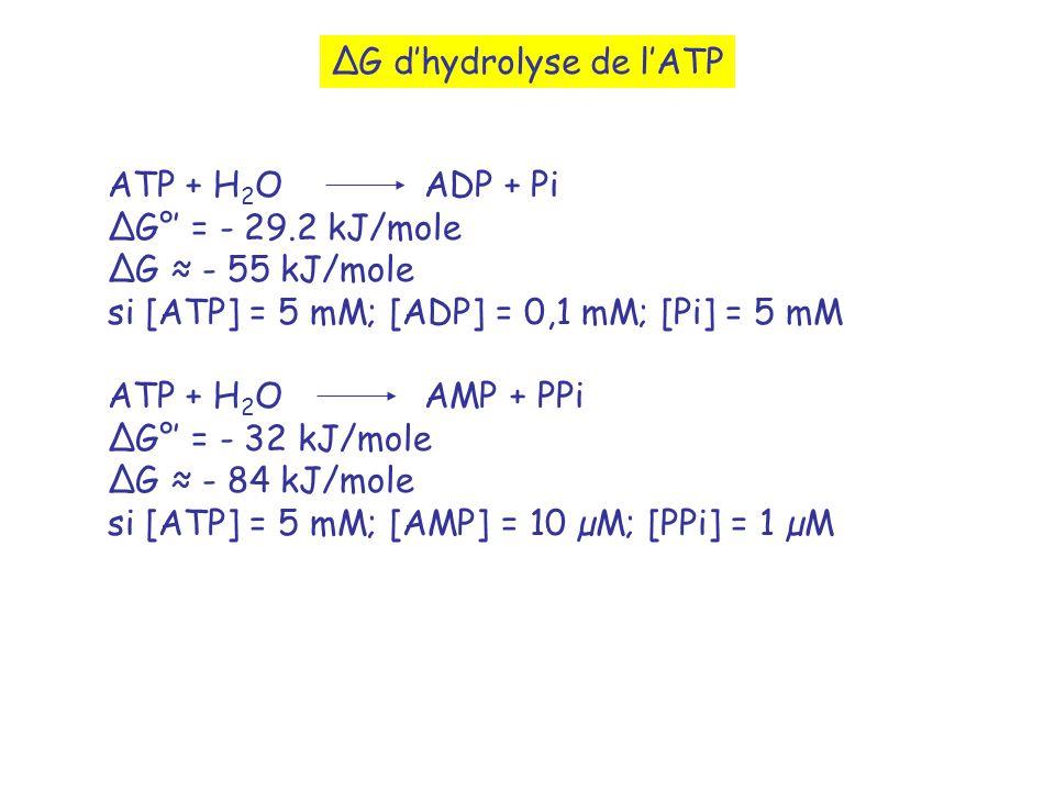 ∆G d'hydrolyse de l'ATP