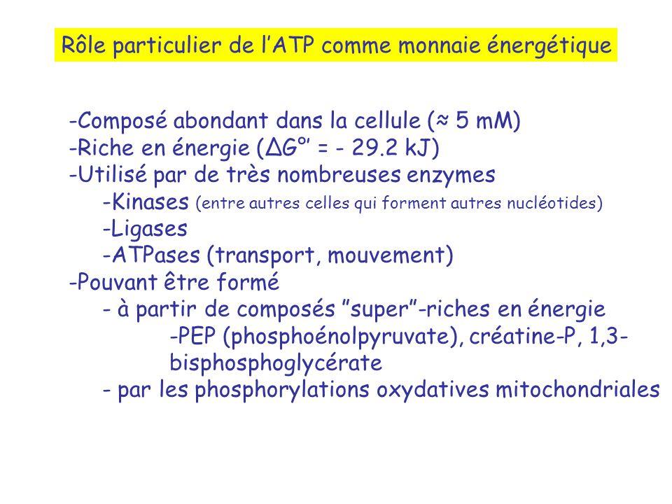 Rôle particulier de l'ATP comme monnaie énergétique
