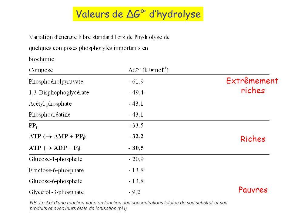 Valeurs de ∆G°' d'hydrolyse