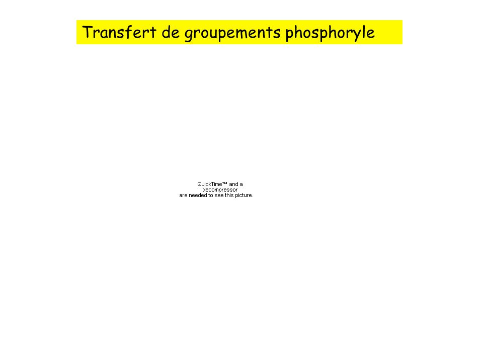 Transfert de groupements phosphoryle