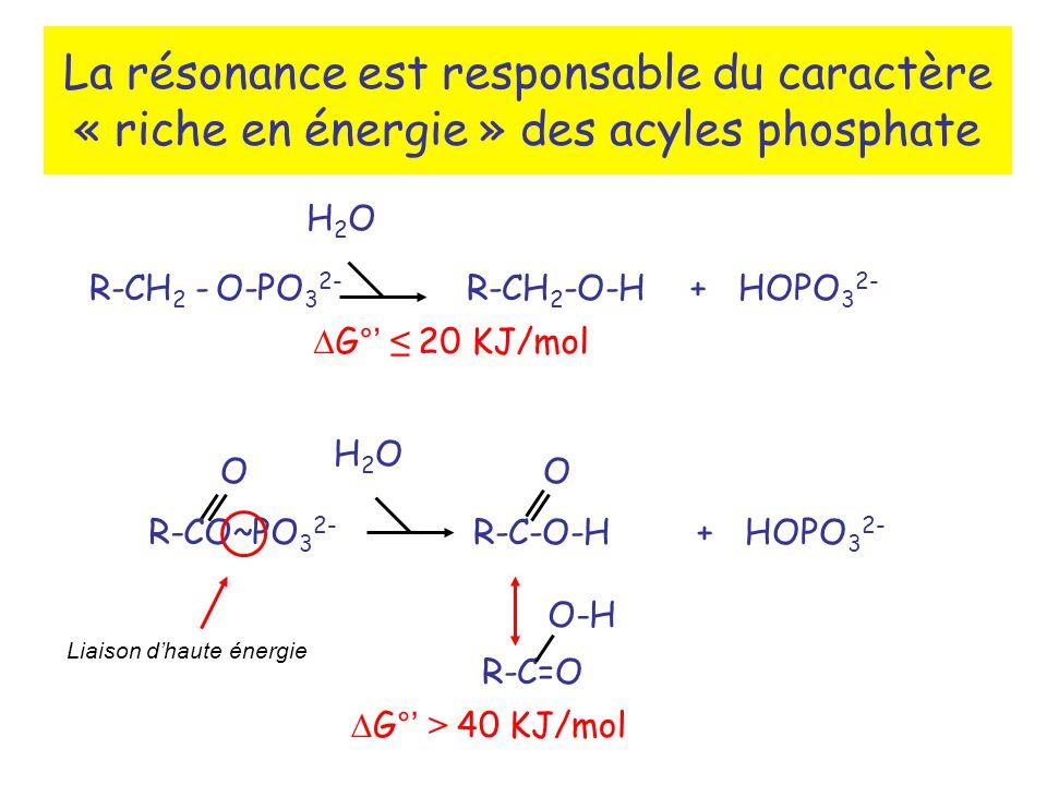 La résonance est responsable du caractère « riche en énergie » des acyles phosphate