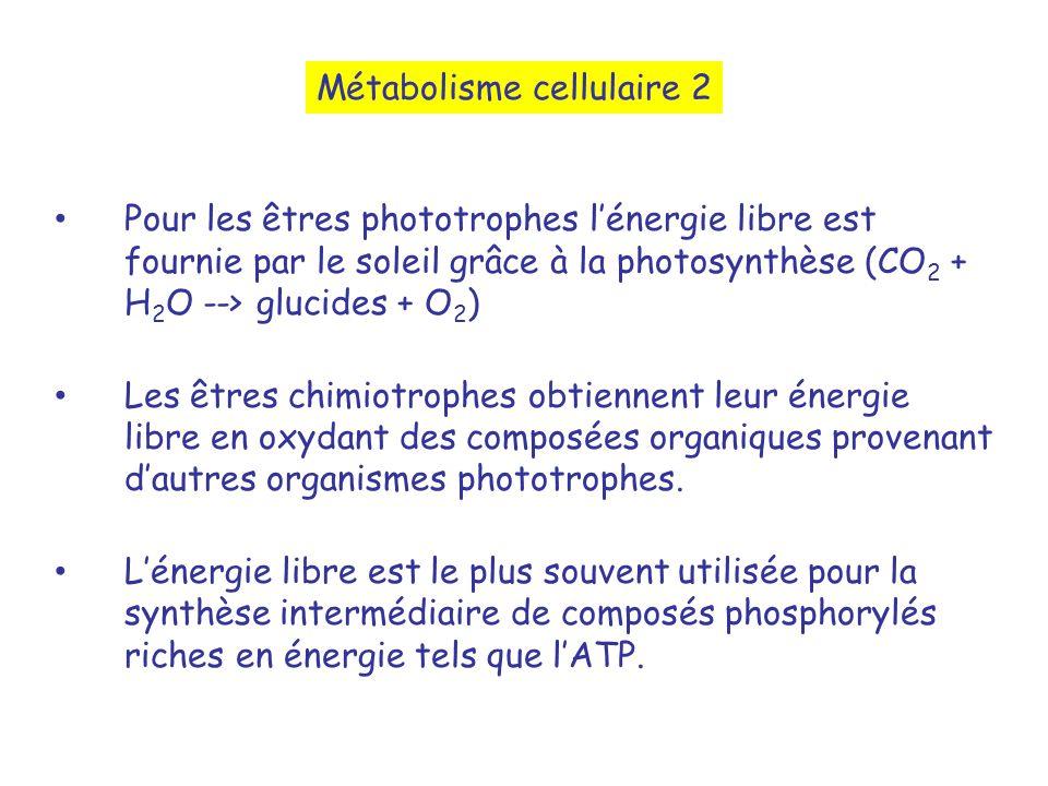 Métabolisme cellulaire 2
