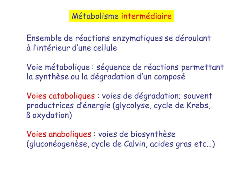 Métabolisme intermédiaire