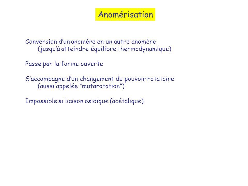 Anomérisation Conversion d'un anomère en un autre anomère