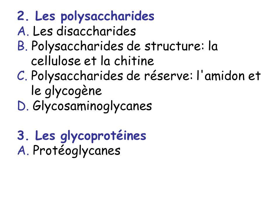 2. Les polysaccharides A. Les disaccharides. B. Polysaccharides de structure: la cellulose et la chitine.