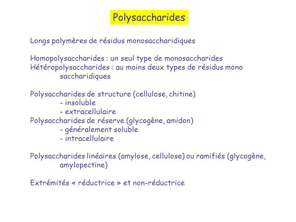 Polysaccharides Longs polymères de résidus monosaccharidiques
