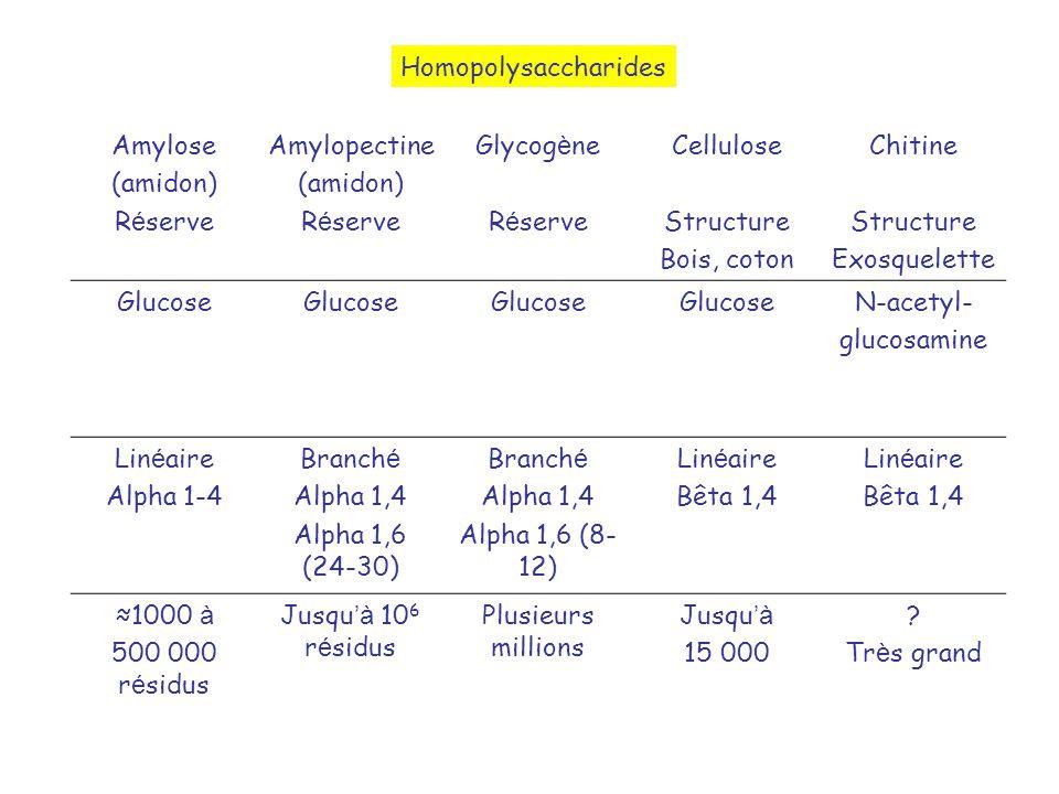 Homopolysaccharides Amylose. (amidon) Réserve. Amylopectine. Glycogène. Cellulose. Structure.