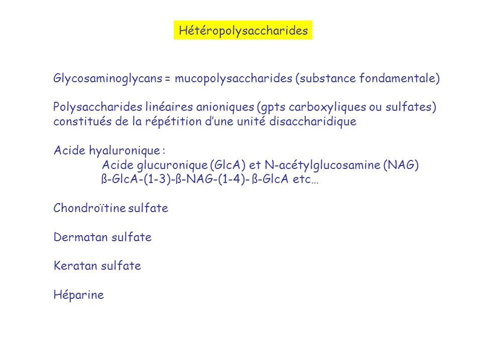 Hétéropolysaccharides