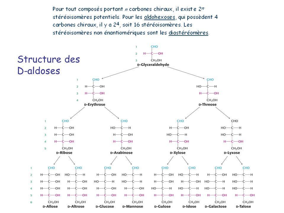 Structure des D-aldoses