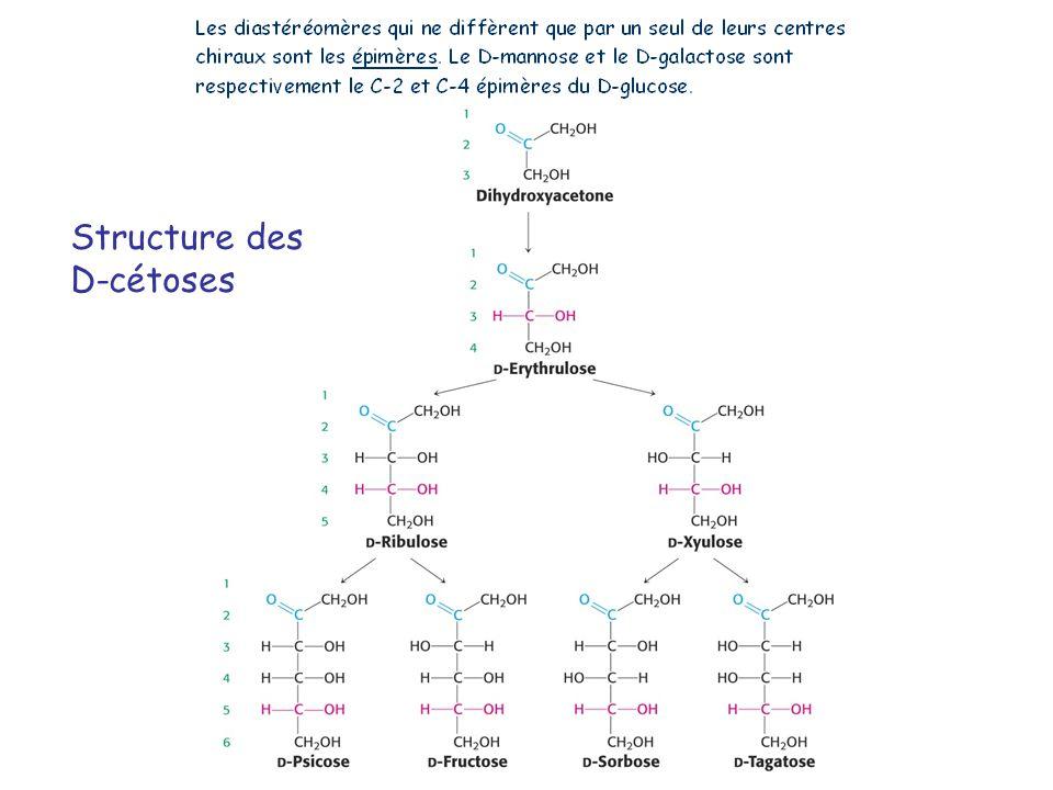Structure des D-cétoses