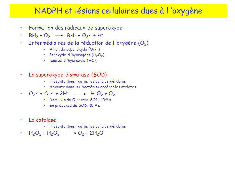 NADPH et lésions cellulaires dues à l 'oxygène