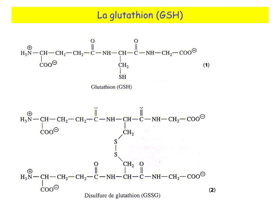 La glutathion (GSH)