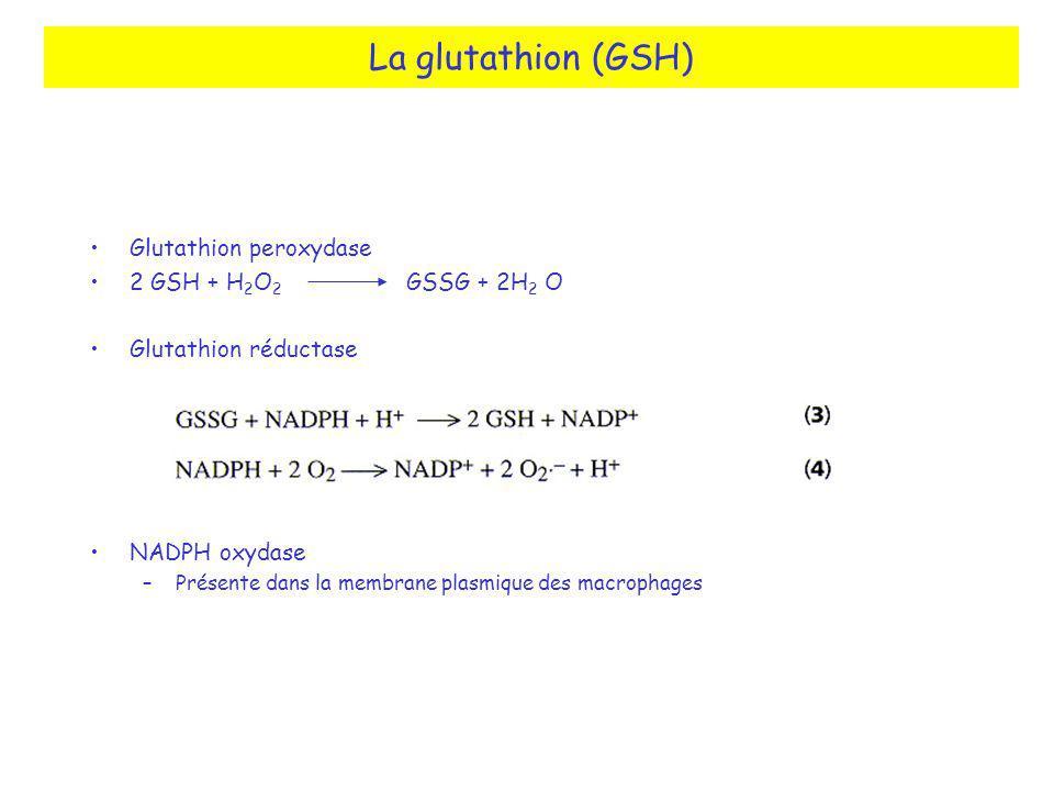 La glutathion (GSH) Glutathion peroxydase 2 GSH + H2O2 GSSG + 2H2 O