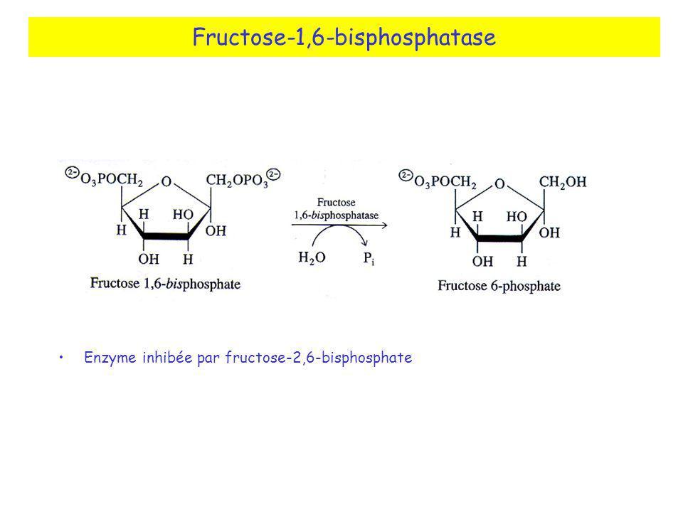 Fructose-1,6-bisphosphatase